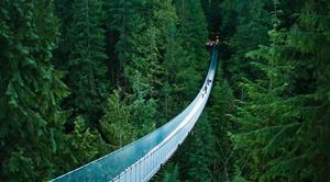 Pont suspendu au milieu d'une forêt de pins