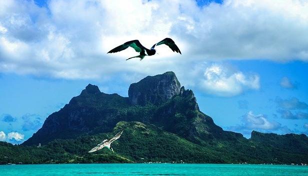 Un oiseau des mers vole au dessus de Bora-Bora