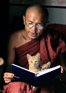 Moine lisant, deux chats roux posés sur son livre ouvert