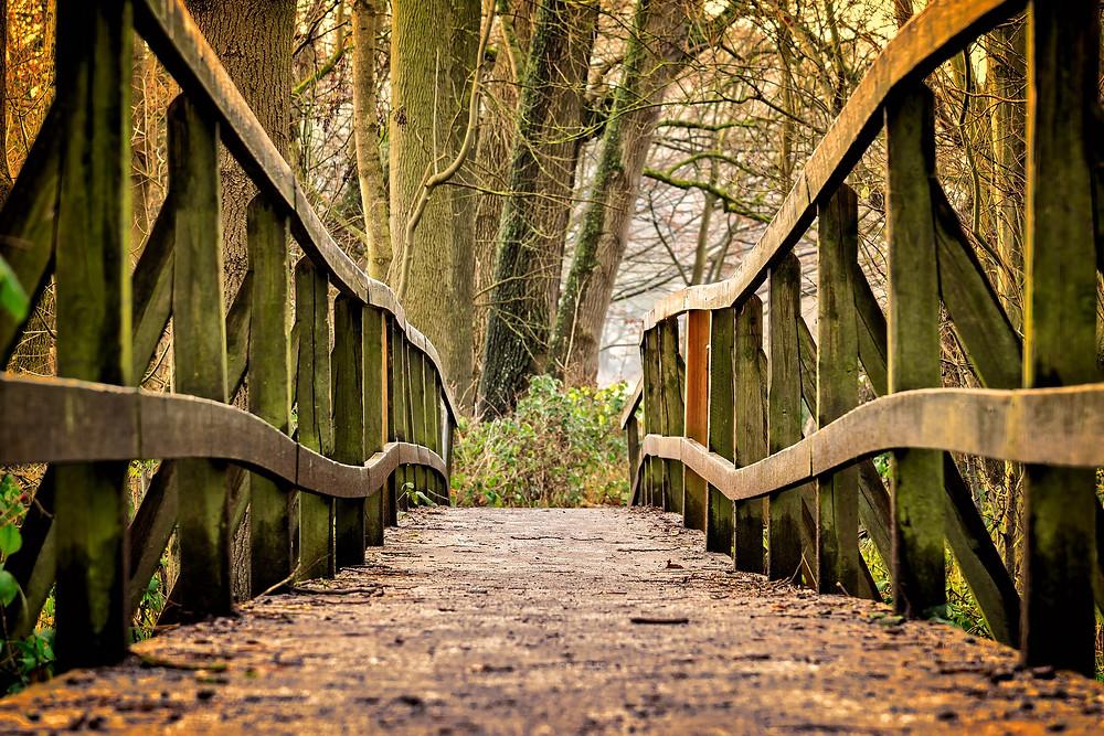 Chemin passerelle à travers une forêt