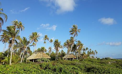 Trois cases bord de côte parmi les cocotiers