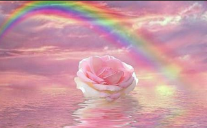 Une rose posée sur une eau rose surmontée d'un arc en ciel