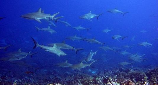 Ballet de requins, passe de Tumakoa
