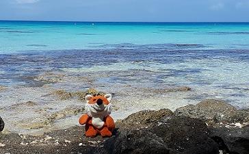 Peluche en forme de renard au bord du lagon