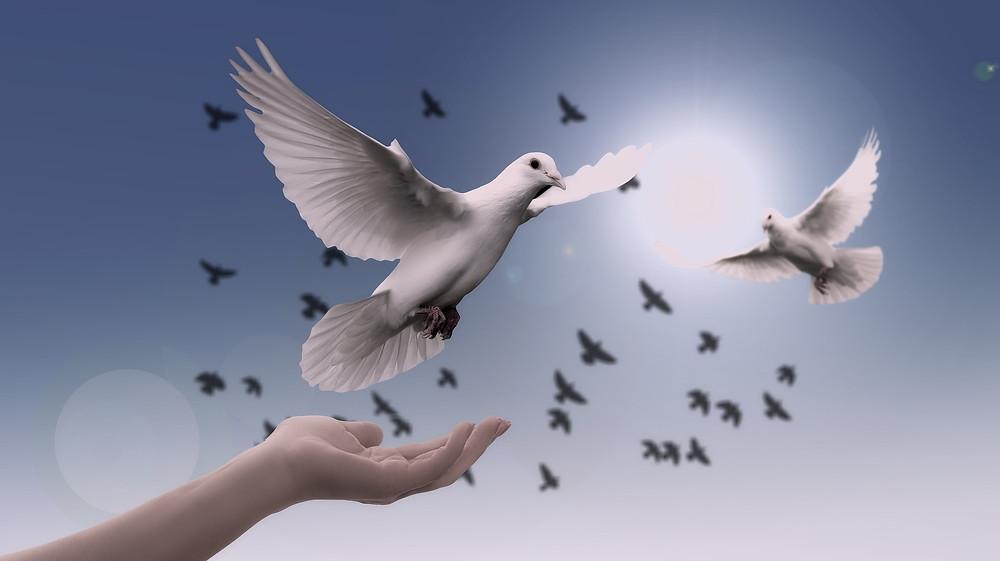 Main ouverte en plein ciel qui laisse une colombe s'envoler