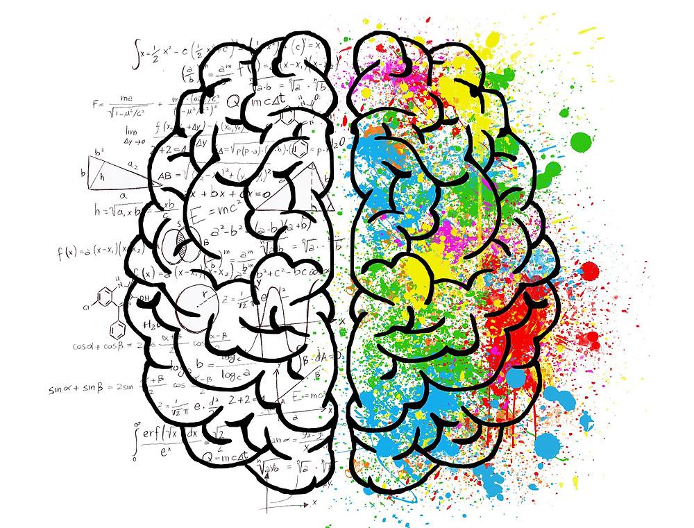 Cerveau, partie gauche grisée et chiffrée, partie droite colorée