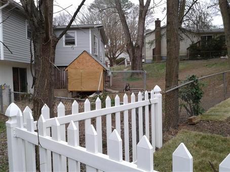 Pit Bulls for Neighbors