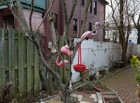 Dystopian Flamingoes