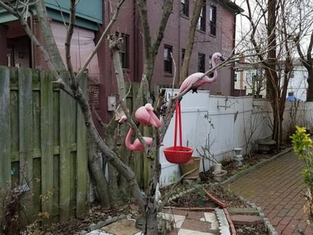 Dystopian Flamingoes