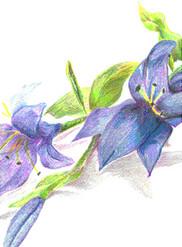 'Blue Flowers'