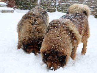 JIRO ET ZIHA  dans la neige