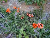 Poppies (Teal).JPG