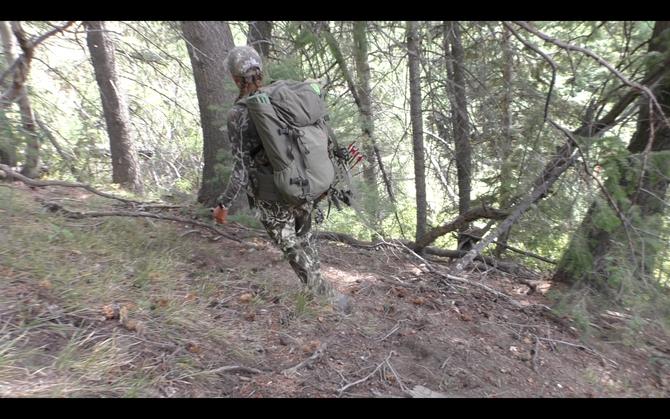 Tips for Stalking Elk in Dark Timber