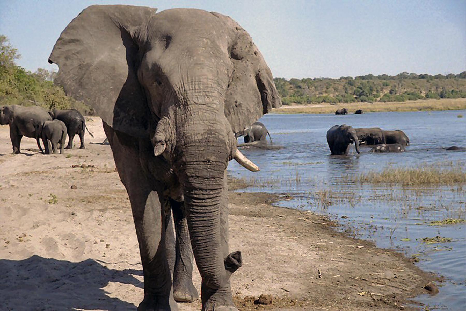 Sth Africa Elephants Bathing
