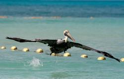 Pelican Quintana Roo, MX