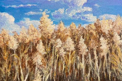 BERKSHIRE MEMORIES - Blowing in the Wind - Berkshire Farmland