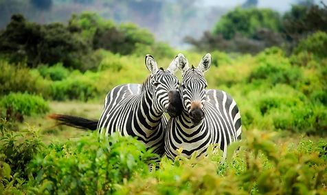 zebra monate