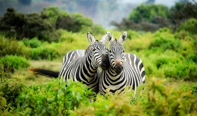 Wildlife (11).jpg