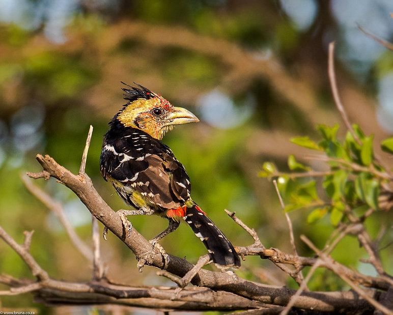bird watch monate