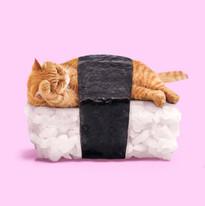 SushiCat.jpg