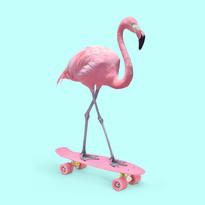 FlamingoSquare.jpg