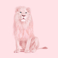 Pink Lion-min.jpg