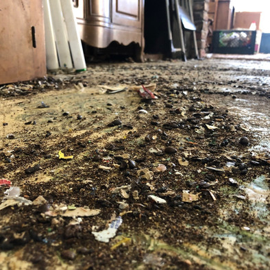 Animal Waste - Rodent, Dog & Cat Feces