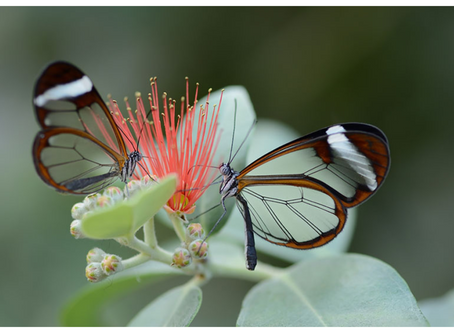 So I learned this thing about butterflies...
