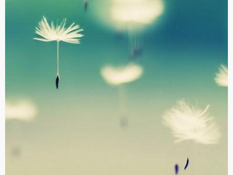 Weed, Flower, Wish?