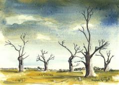 Oak Trees, Mundon (1)