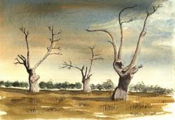 Oak Trees, Mundon (3)