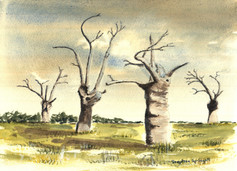 Oak Trees,Mundon (2)