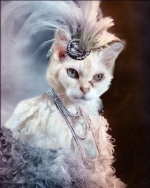 old cat.jpg