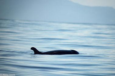 False killer whales Comoros