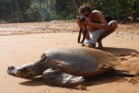 Hawksbill Turtle Moidjio