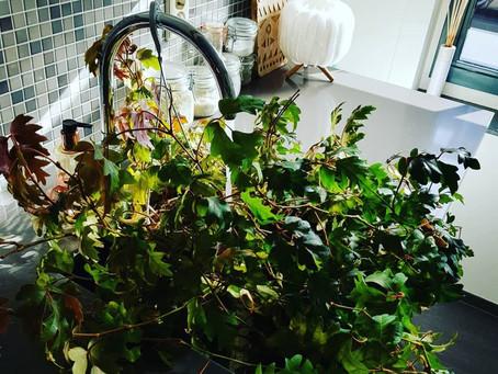 Lief zijn voor je planten = lief zijn voor jezelf..