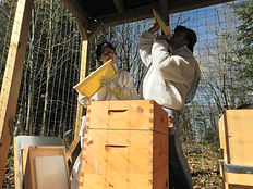 Picture of LifeGevity Soap Company founders eating honey from the hive.