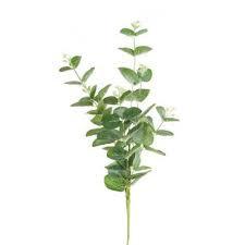 Eucalyptus Lemon EO