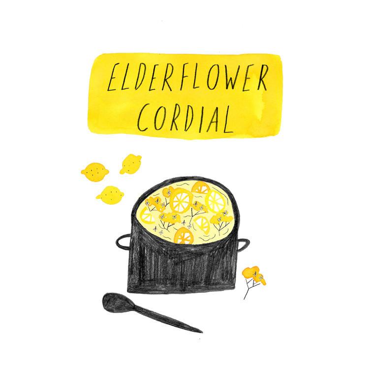 Elderflower Recipe, Sarah Martin Illustration