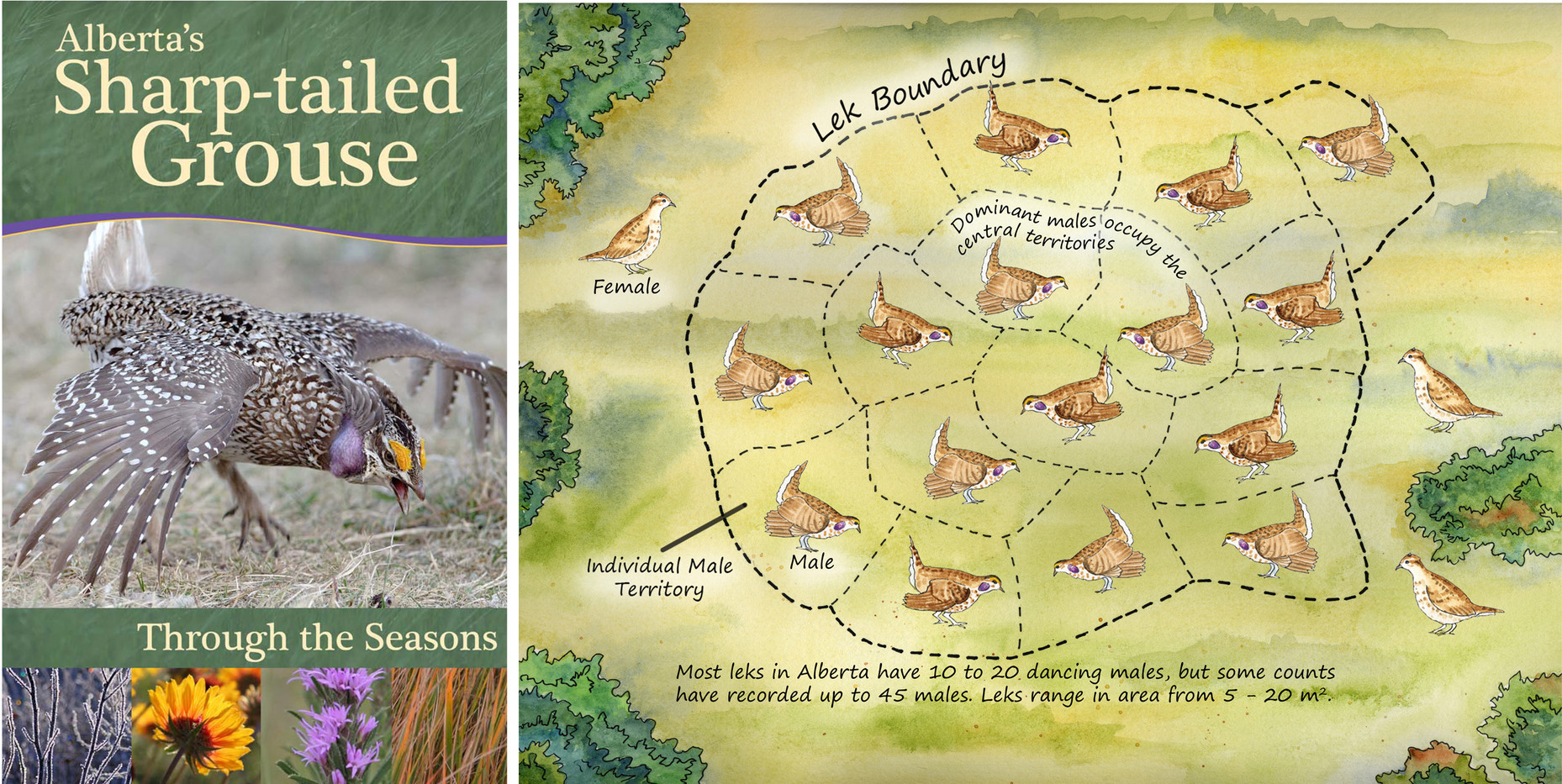 Sharp-tailed Grouse Booklet