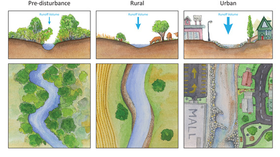 Human Impacts on stream morphology (for Nose Creek Watershed Alliance)
