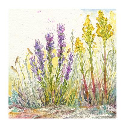 Late August Grasslands