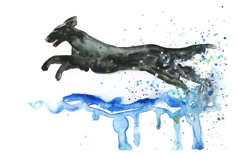 flat-coated retriever watercolour painting
