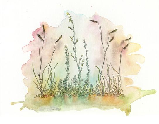Late Season Grasses and Sage