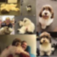 Happy Collage.jpg