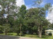 Madison Park Gainesville Florida