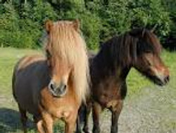 Naighbour horses