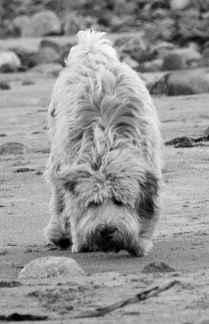 Oscar at the beach (mono)