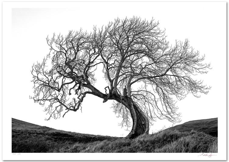 Frandy Tree Threatens