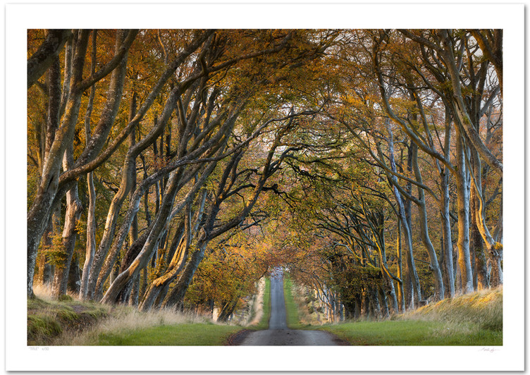 _66A1776v4 (Autumn Beech Avenue).jpg